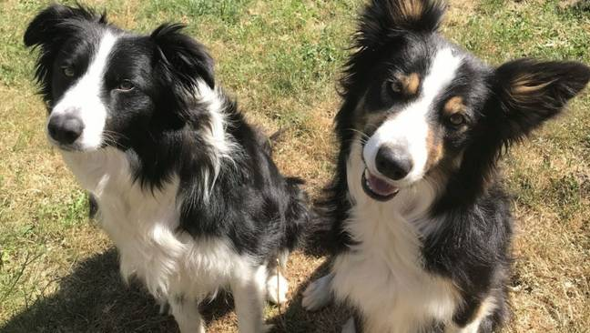 Tala (left) and her sister Harli (Credit: Vets Now)