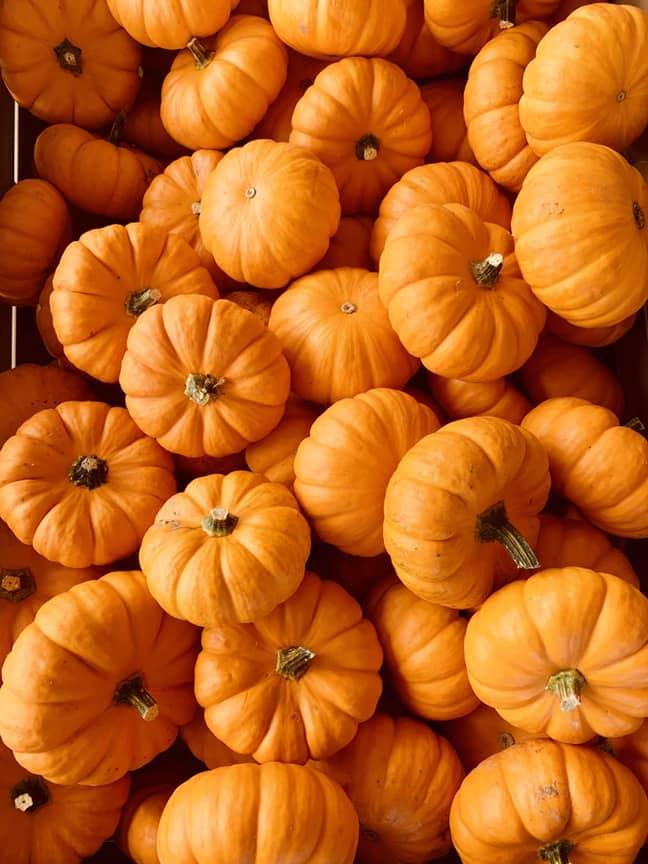 Pumpkin season is almost upon us (Credit: Unsplash)