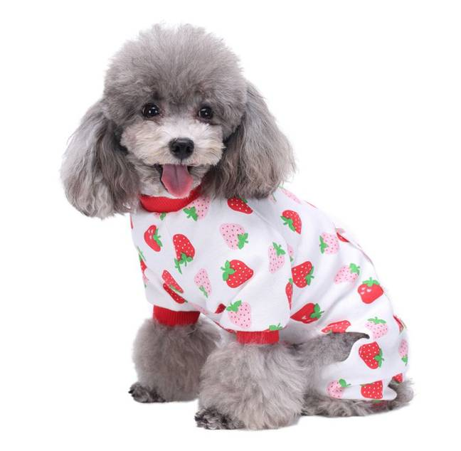 The pyjamas come in three different prints (Credit: Dachshund Everywhere)