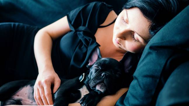 So, cosying up next to a canine will get you a better night's sleep than sleeping next to another human (Credit: Unsplash)