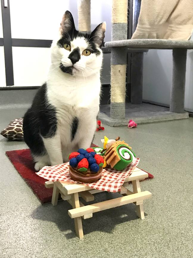 Credit: Battersea Dogs & Cats Home