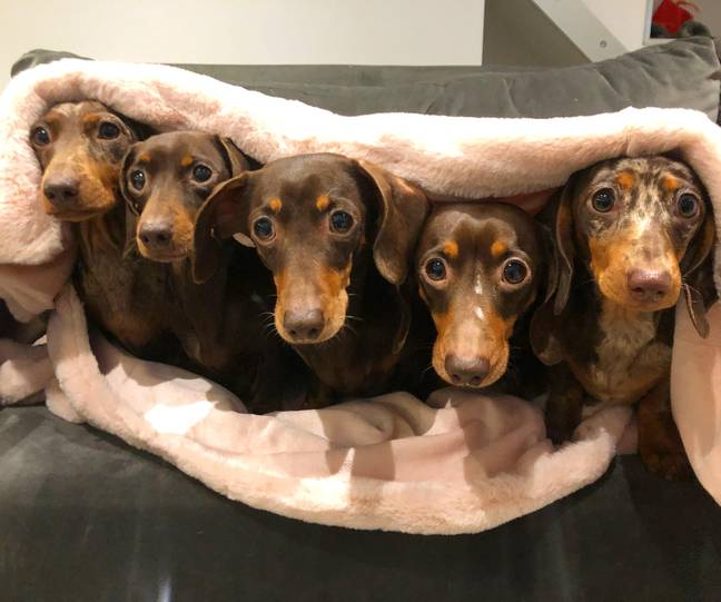 Harriet says she loves all five of her dogs equally (Credit: Caters)