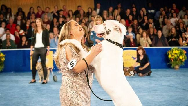 The show shines a spotlight on all the adorable, loving rescue dogs out there (Credit: Hallmark Channel)