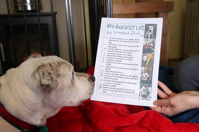 Doggo Zach, 16, is slowly completing his bucket list (Credit: Caters)