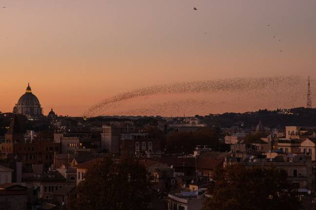 Starlings are typically found in this area of Rome (Credit: PA)