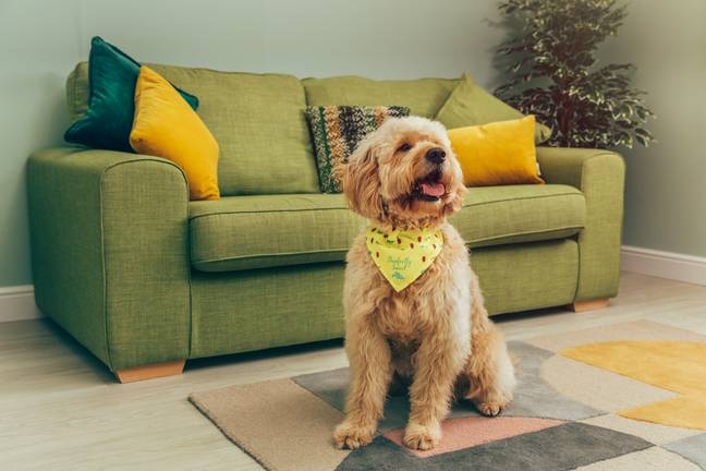 Each pooch will also get its own bandana! (Credit: Pets At Home)