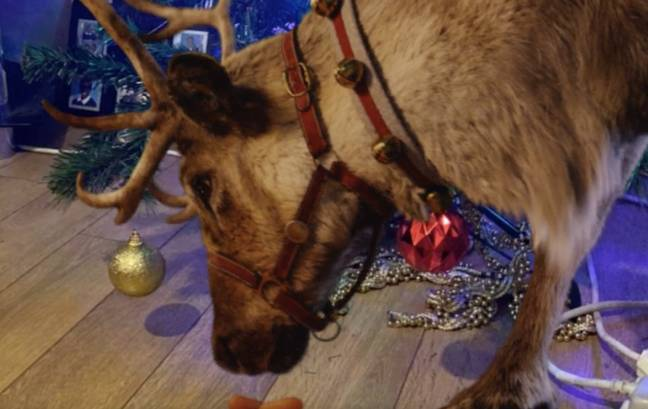 The Reindeer is set to bring a slice of magic into your living room (Credit: Reindeer Ready/Tobi Akingbade)