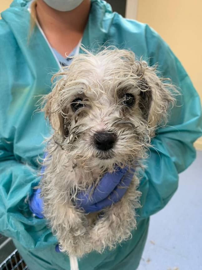The pups are now in the care of Dogs Trust and will be looking for new homes (Credit: Dogs Trust)