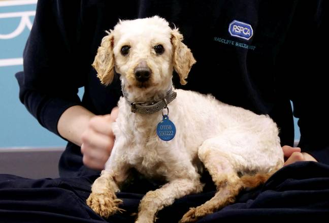 The dogs will be at the RSPCA until they are rehomed (Credit: SWNS)
