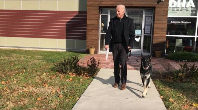 Biden has two German Shepherds - one of which, a rescue pup (Credit: Twitter @First_Dogs_USA )