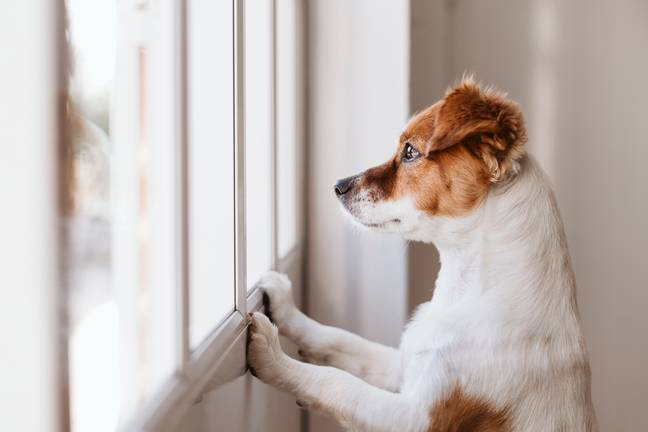 Up to 2.2 million dogs are at risk (Credit: Shutterstock)