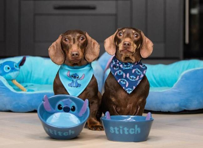 As well as a bed and dog toy, you can also grab bandanas and bowls (Credit: Primark / Instagram - jacob_n_bruno)