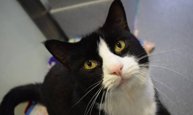 Smudge has also found somewhere to live (Credit: Battersea Dogs & Cats Home)