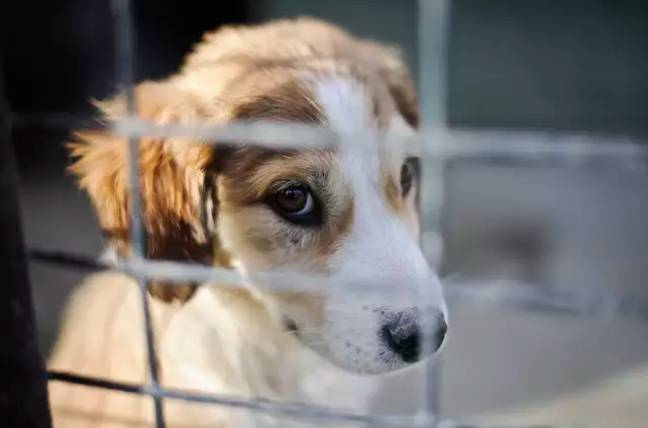 Suffering puppies is becoming all too common thanks to the illegal import trade (Credit: PA)