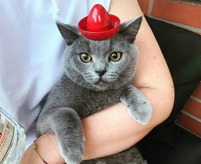 The hat can also be used for cute pet pics (Credit: Sierra Tequila South Africa)