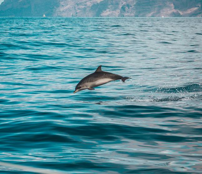 Common dolphin are frequently spotted in the area (Credit: Pexels)