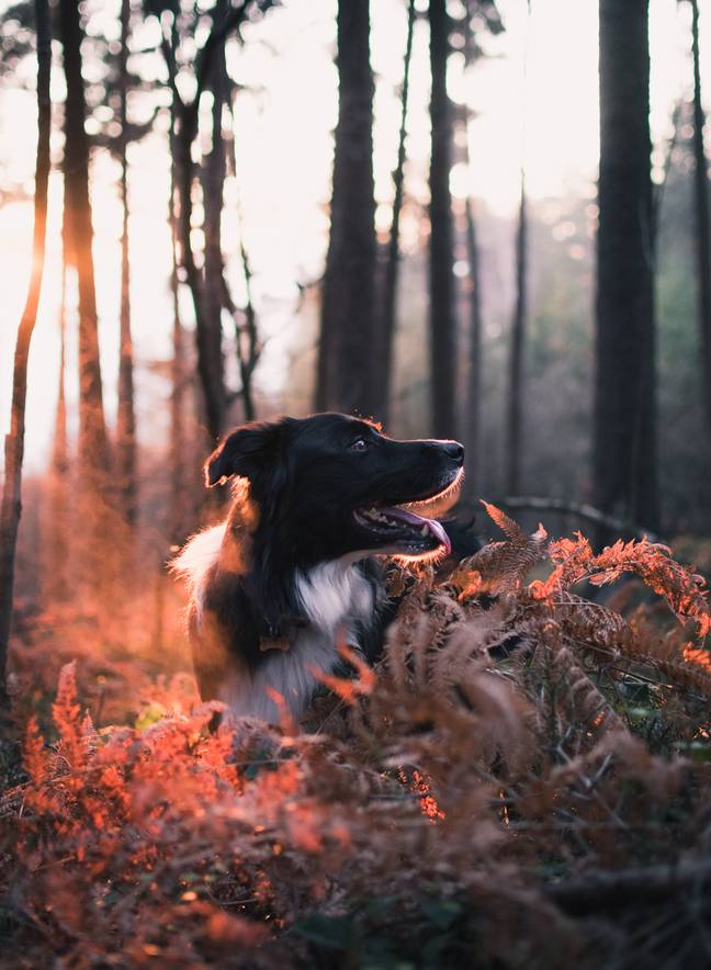 In hot weather try to walk your dog in shades areas at cooler times of the day like early morning or evening (Credit: Unsplash)