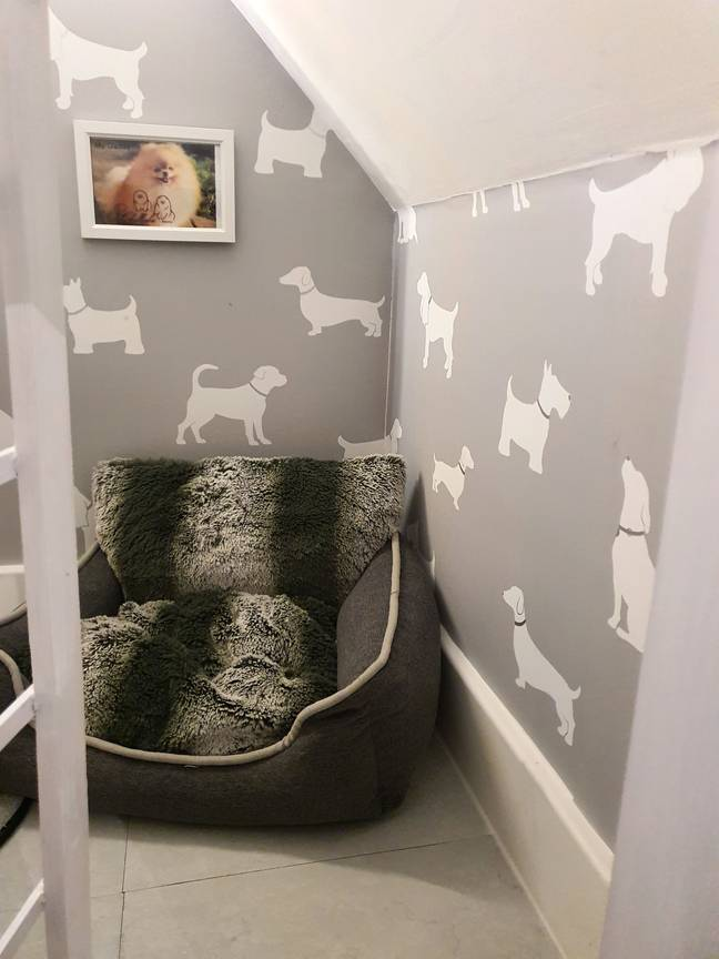 The cupboard is now perfect for a dog to lounge in (Credit: Caters)
