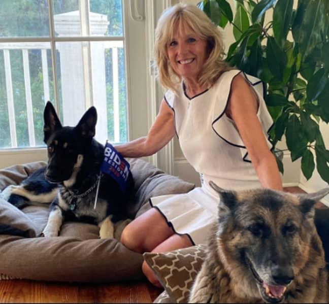Jill Biden's press secretary revealed the pups are settling in (Credit: Instagram)
