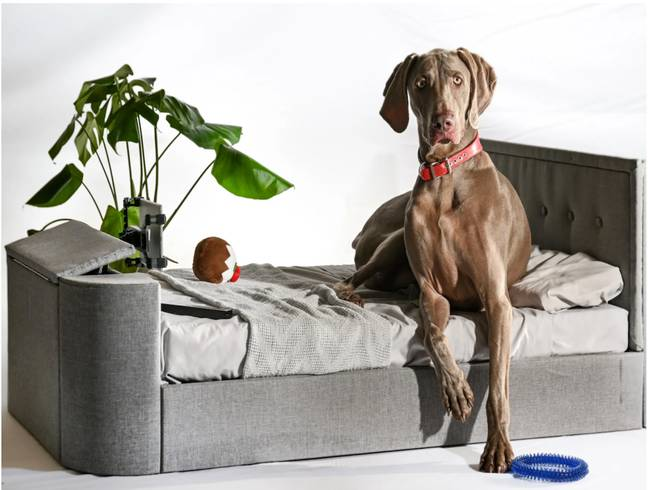 The 'Pup-vision Upholstered TV bed' (Credit: Time4Sleep)