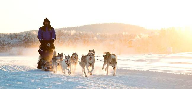 Meet the resident huskies on a snowy dog-sledding experience (Credit: Northern Lights Village)