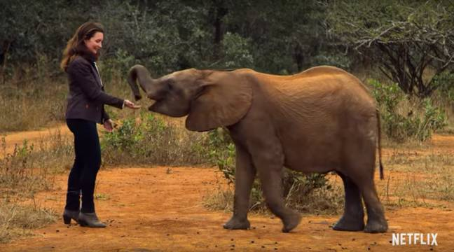 It's a must for those who love baby elephants. (Credit: Netflix)