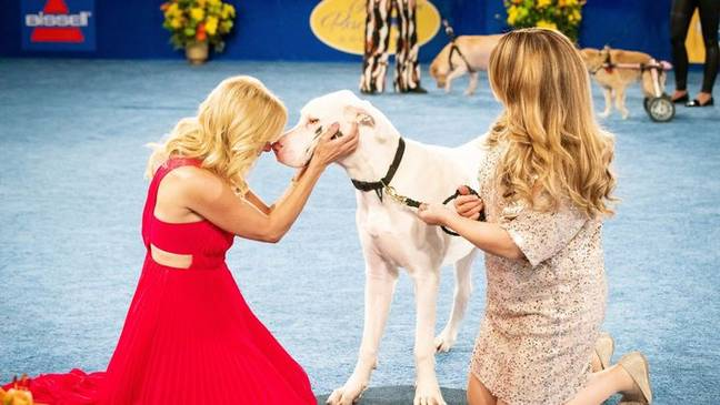 The encourages people to adopt dogs rather than buy them from pet shops and breeders. (Credit: Hallmark Channel)