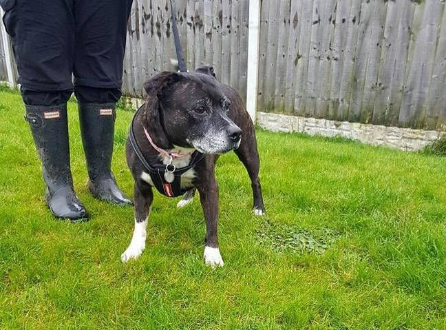 Socks is 10-years-old (Credit: RSPCA)