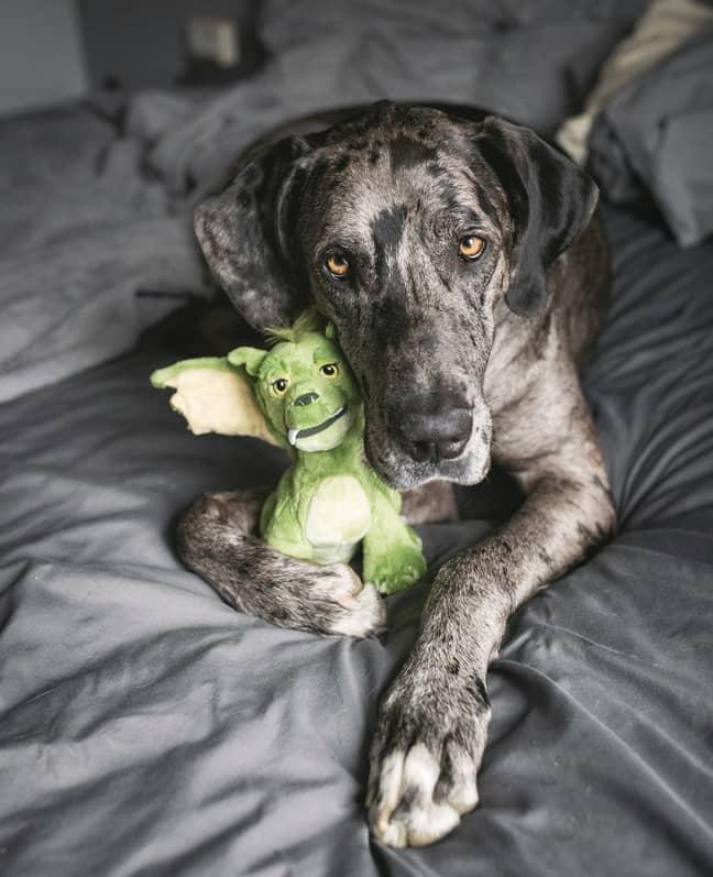 Meet Elliott and her toy, Elliott (Credit: SWNS)