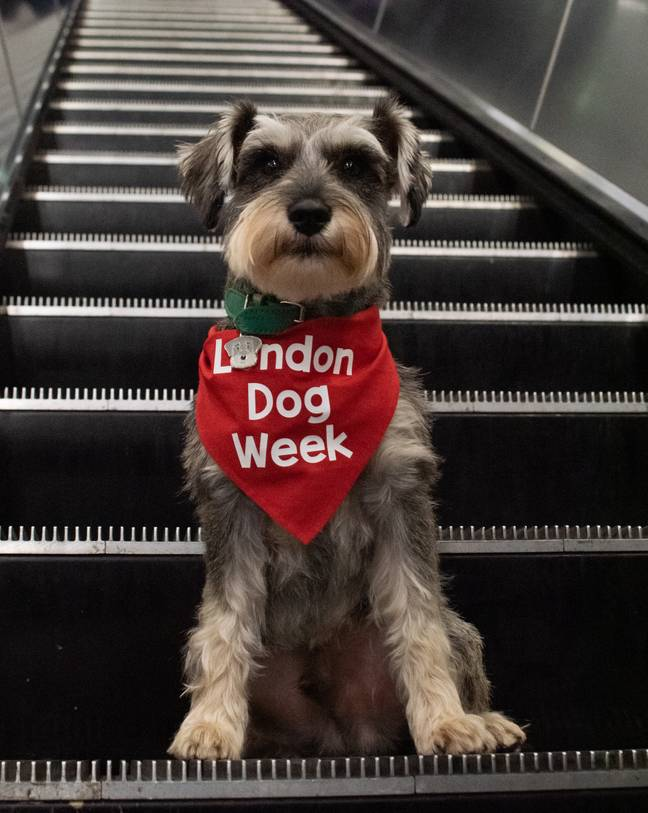 This might well be the cutest event of the year (Credit: London Dog Week)