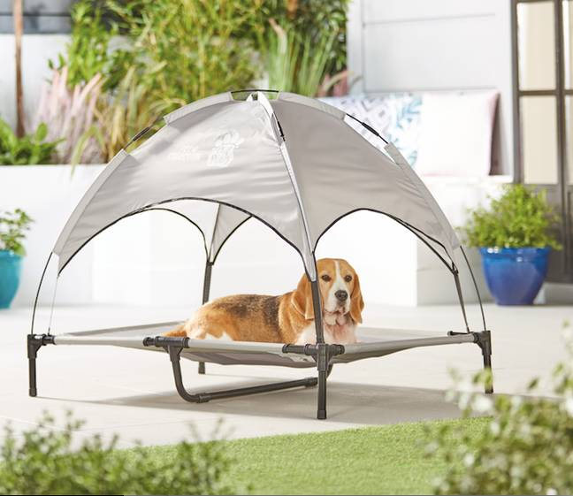 Dogs can now keep cool thanks to Aldi (Credit: Aldi)