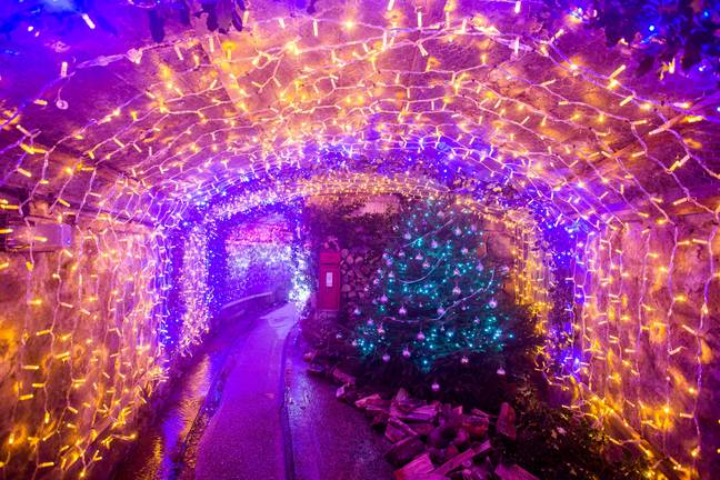The UK's longest festive tunnel of lights has opened in Cornwall (Credit: SWNS)