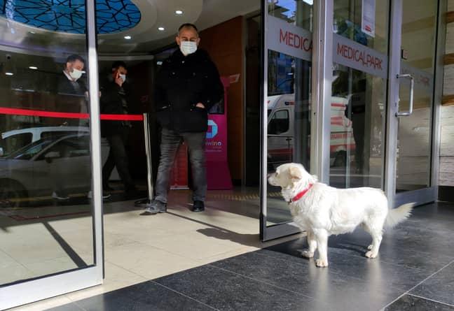 Boncuk waited outside the hospital daily (Credit: PA)