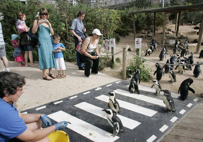 The zoo is confident it will find homes for the animals (Credit: SWNS)