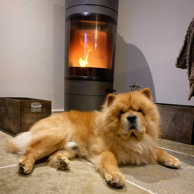 You can chill out with your dog infront of the fire in a luxury cottage (Credit: Canine Critics)