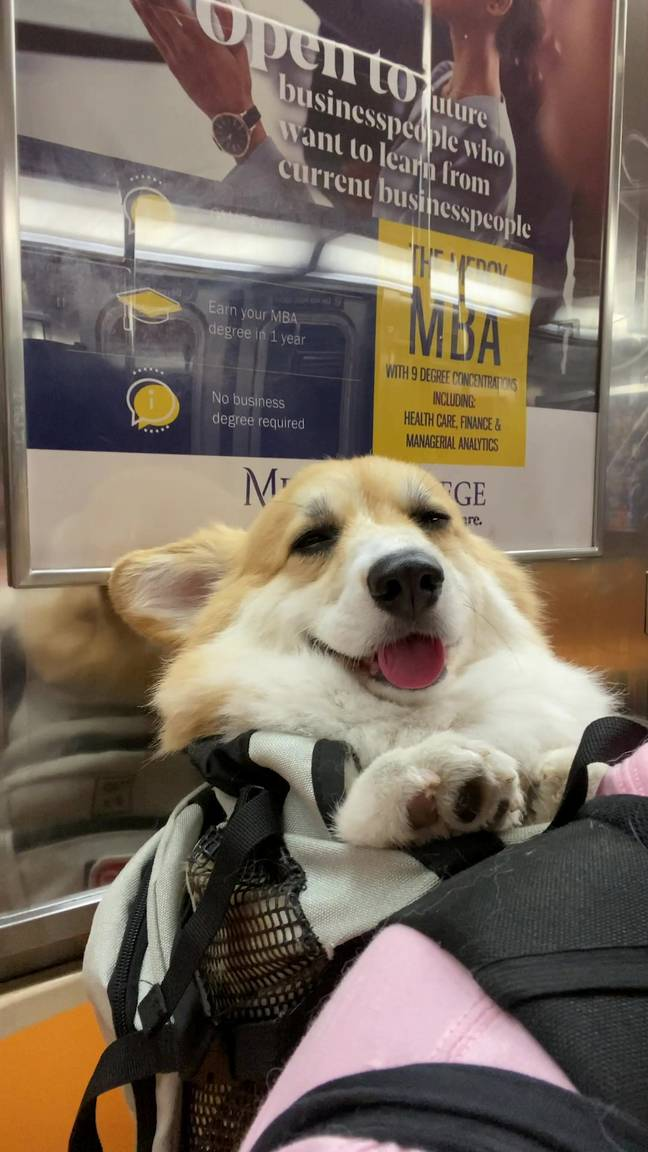Little Maxine naps, smiles, and interacts with passengers (Credit: SWNS)
