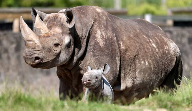 You'll be looking after rhinos, giraffes and zebras (Credit: PA)