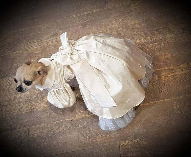 Brides-to-be can purchase adorable 'Doggy Bridesmaid Dress' in a variety of colours. (Credit: The Posh Paws Company)