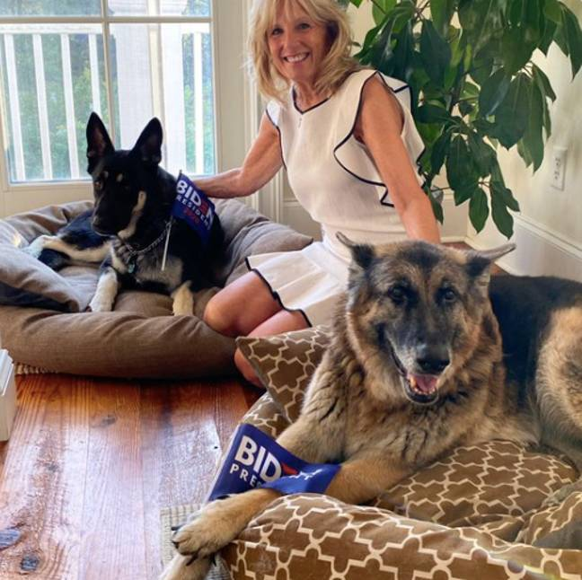 The Biden family have two dogs called Major and Champ (Credit: Twitter/ Jill Biden)