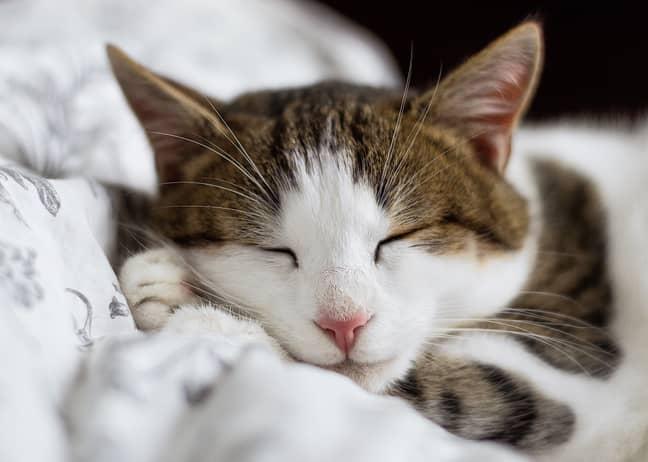 Silentnight are after pets to model its new range of pet beds (Credit: Unsplash)