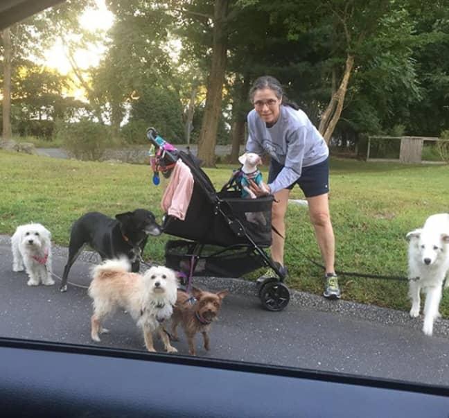Melissa is looking after seven pups Credit: Instagram/ @pinkpigletpuppy