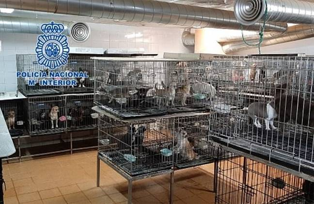 The pups were found trapped in cages (Credit: CEN/National Police)