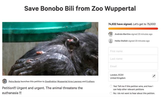 Ms Brente launched a petition online in attempt to save Bili the Bonobo