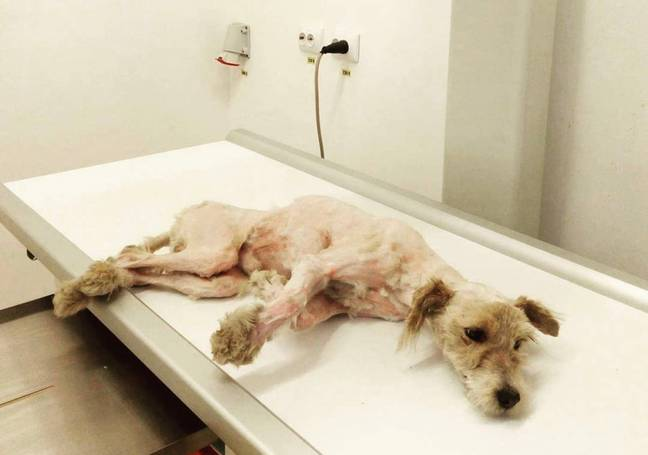 Poor Benji had a broken spine and was immediately taken for specialist care (Credit: Caters News)