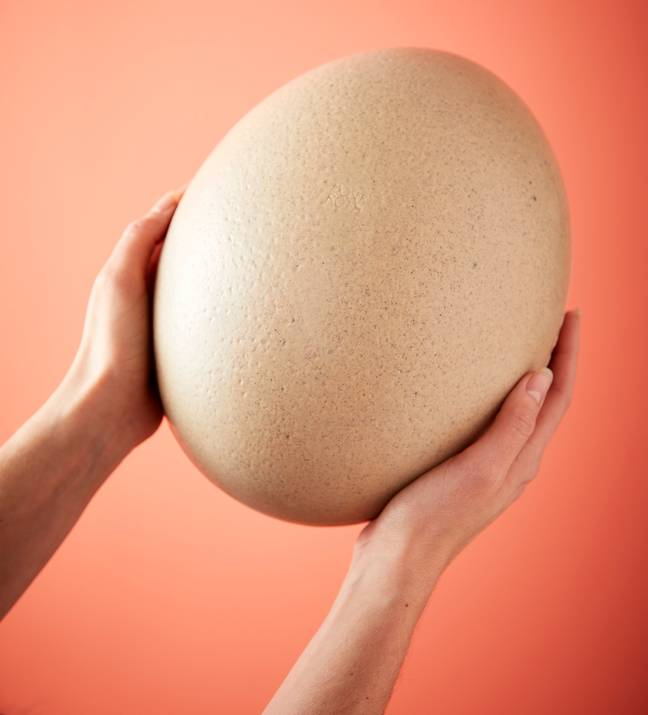 This giant white chocolate and caramel ostrich egg is £14.99 (Credit: ALDI)