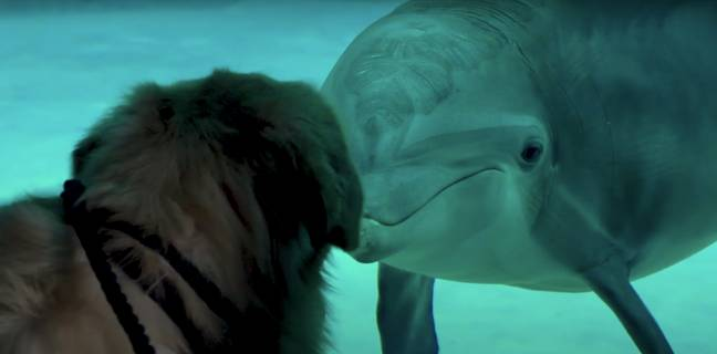 The whole day was captured on social media (Credit: YouTube / Clearwater Marine Aquarium)
