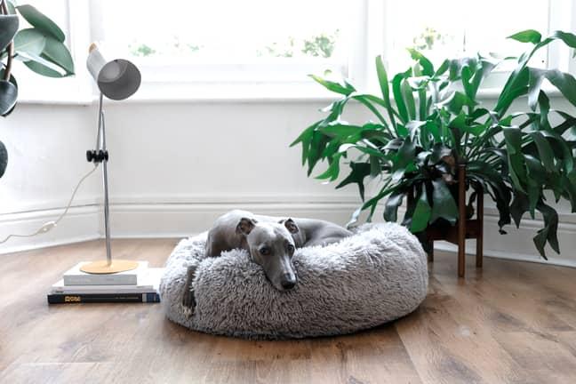 Lloyd also tested a fleecy dog bed (Credit: Aldi)