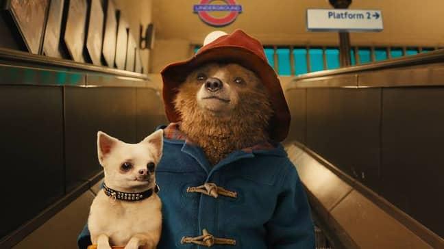 Kai was found abandoned at a train station just like Paddington Bear (Credit: Studio Canal)