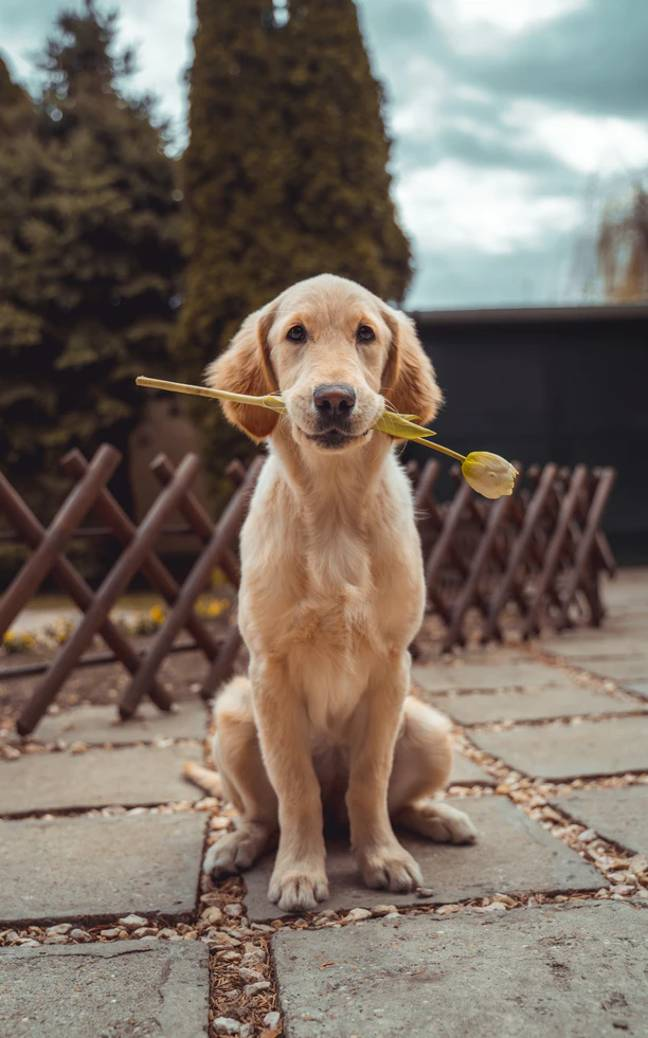 Who wouldn't want to hang out with this gorgeous guy? (Credit: Unsplash)