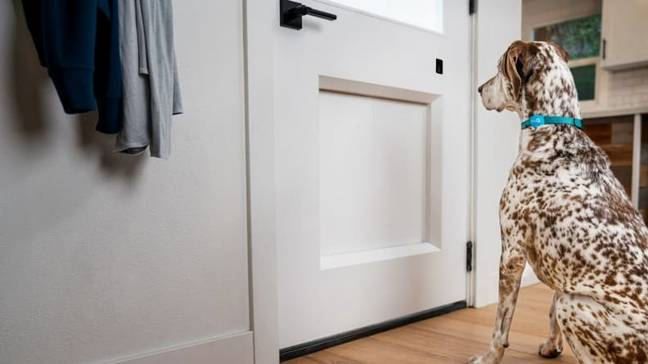 The app means you have complete control of your pet even when you're not home (Credit: MyQ Pet Portal)